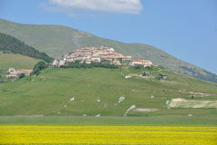 castelluccio-flowers