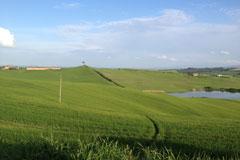 rally-landscape